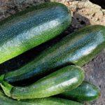 Выращивание кабачков. Что лучше: теплица или открытый грунт?