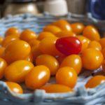 Высадка ранних помидоров в открытый грунт. Как сделать всё правильно?