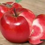 Сорт яблок «Розовый жемчуг». Где купить и как сажать?