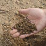 Как правильно удобрять почву?