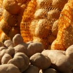 Как сохранить картошку зимой?