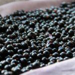 Как правильно заморозить черную смородину на зиму?