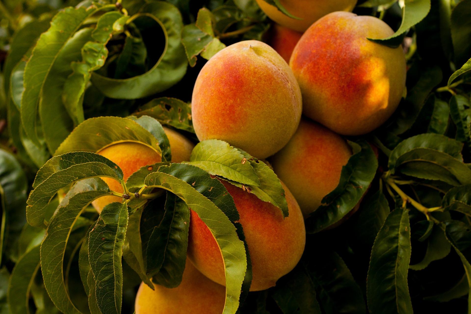 как приготовить вкусное варенье из персиков
