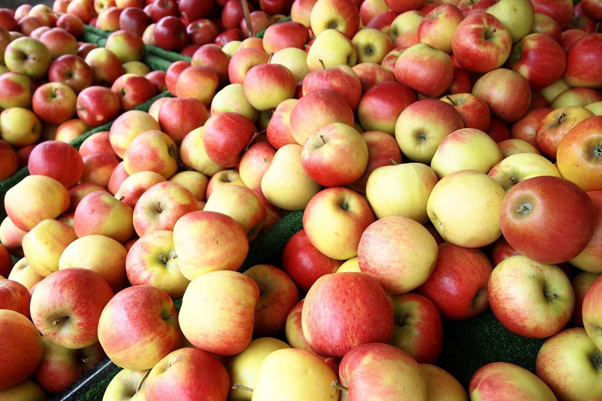 Яблуня слава переможцям опис фото відгуки