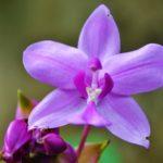 Какой грунт нужен для орхидеи?