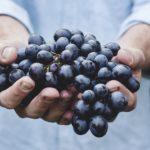 Как правильно выращивать виноград в Подмосковье?