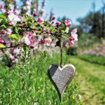 Когда нужно сажать саженцы плодовых деревьев? Выбираем правильное время.