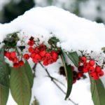 Подготовка сада к зиме для начинающих