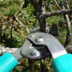 Обрезка плодовых деревьев осенью для начинающих